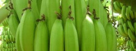 ECO-FRUIT. FROM BANANAS TO PLASTIC